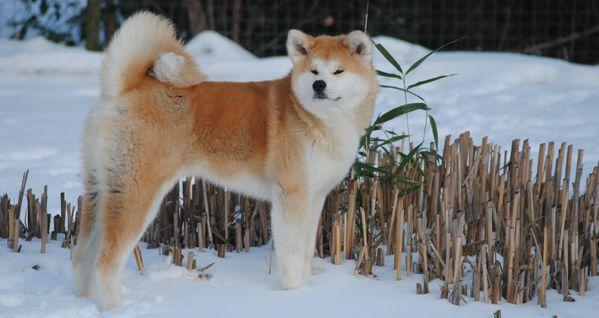 Startseite Dezember 2014 Akita