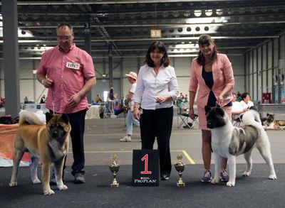 Ergebnisse 2019 - CACIB Erfurt - American Akita (BOB/BOS)