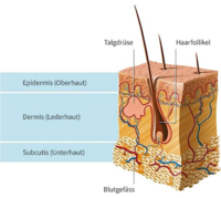 Sebadenitis - Haarfollikel