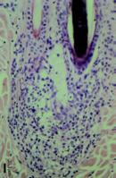 Zellen SA