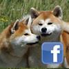 News - Facebook