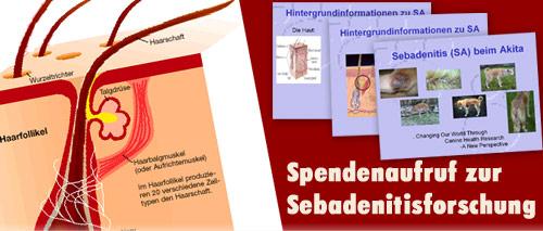 Spendenaufruf zur Sebadenitisforschung