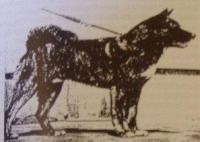 Herkunft und Geschichte - Tamagumo-Go (Foto1953)