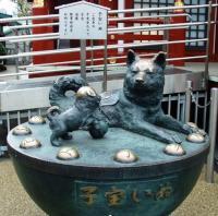 Herkunft und Geschichte des Akita und des Amerikanischen Akita